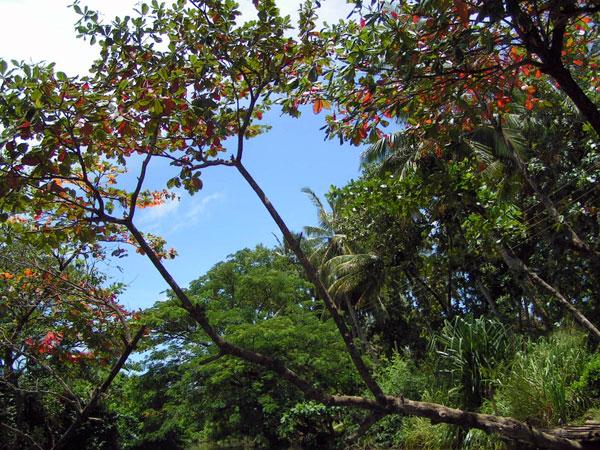 Smuk jungle på Sri Lanka