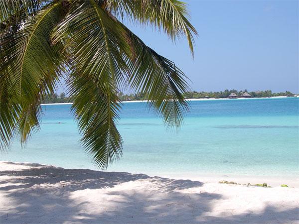 Rejser til Sri Lanka og Maldiverne
