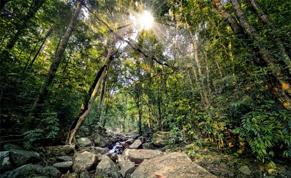Yala National Park på Sri Lanka