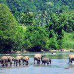 Du kan nemt se elefanter i flere af nationalparkerne
