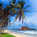 Standene på Sri Lankakan være meget frodige