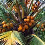 Sri Lanka byder på mange eksotiske frugter