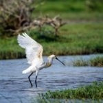 Sri Lanka byder på et varieret fugle- og dyreliv