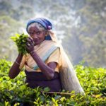 Ude i teplantagen
