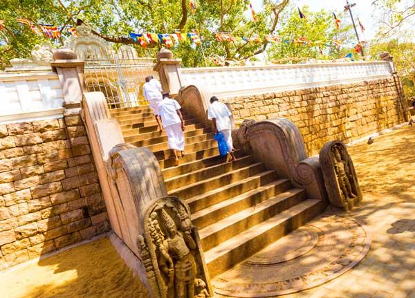 Sri Maha Bodhiya er selve Oplysningens Træ