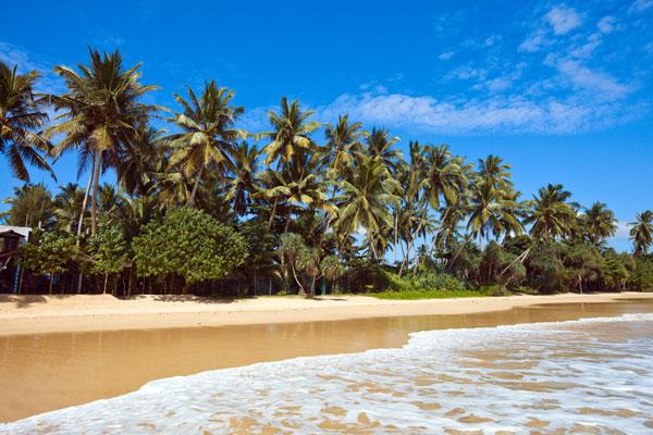 Smuk og idyllisk palmestrand på Sri Lanka