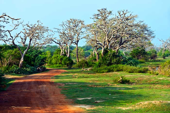 På Safari i Yala Nationalpark på Sri Lanka