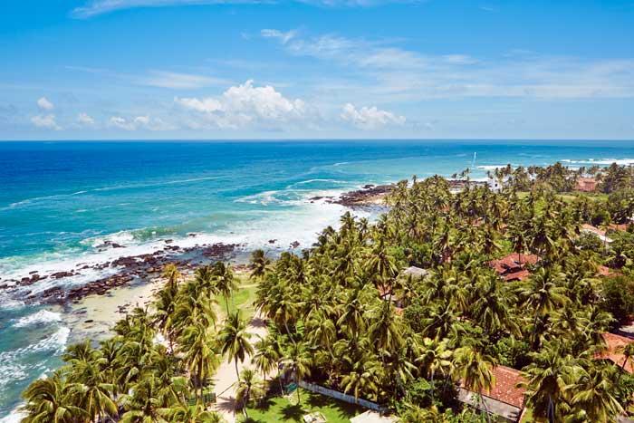 Flot billede af kyst og palmer
