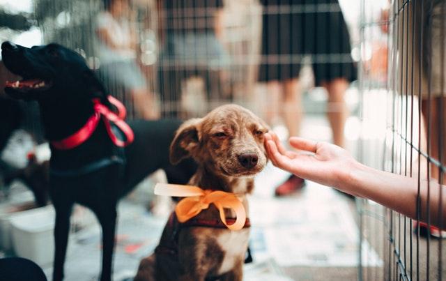 Hundeforsikring når din hund skal passes hos andre